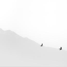 free | 2012