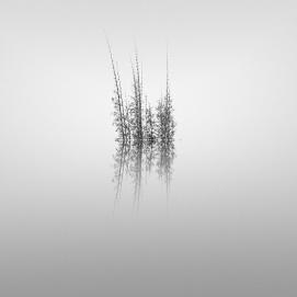 bamboo pond   2010