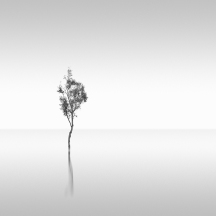 silent world | 2012